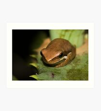 Froglet Art Print