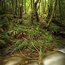 Arthur River rainforest, Tasmania by Kevin McGennan