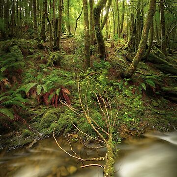 Arthur River rainforest, Tasmania by kevinmcgennan