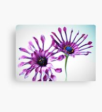Whirligig daisies Canvas Print