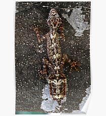 Northern Leaf-Tailed Gecko  (Saltuarius moritzi) Poster