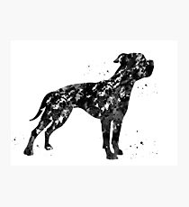 American bulldog Photographic Print