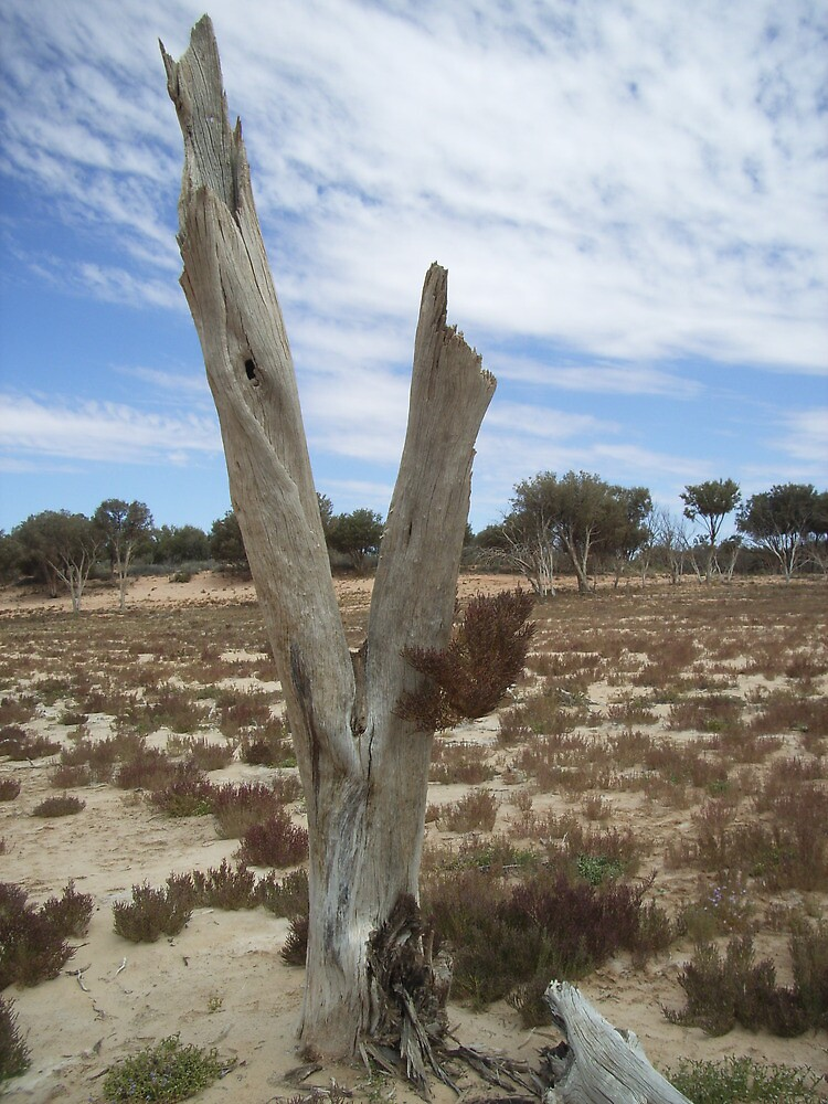 Victim of drought - Lake Mary, South Australia by Jeanette Laughton