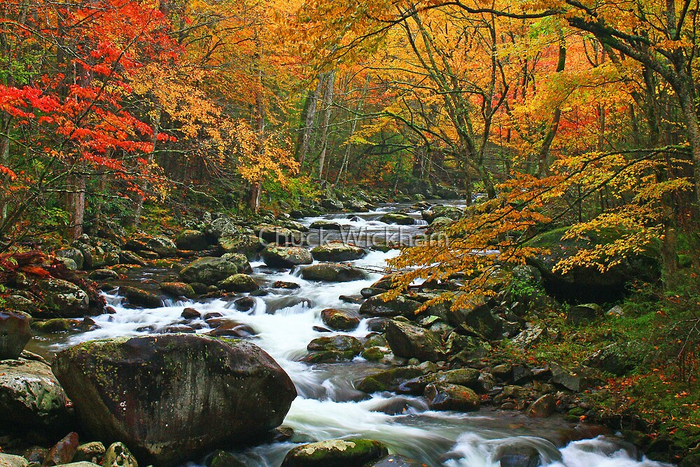 MIDDLE PRONG LITTLE RIVER,AUTUMN* by Chuck Wickham