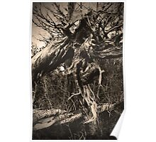 Spooky Hallow Poster