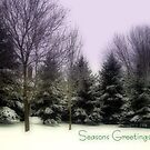 Seasons Greetings by Robin Webster