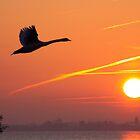 The Start of A New Day by Jo Nijenhuis