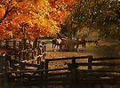 Lazy Autumn Day  by Elaine  Manley