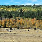 Autumn Comes To Hope Valley I – Hope Valley, Alpine County, CA by Rebel Kreklow