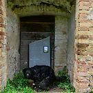 Street art installation by Maurizio Cattelan, Horti Leonini, San Quirico D'Orcia, Tuscany, Italy by Andrew Jones