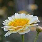 Macro Flower by Sunil Bhardwaj