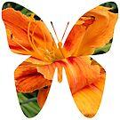 Daylily butterfly by Nancy Cupp