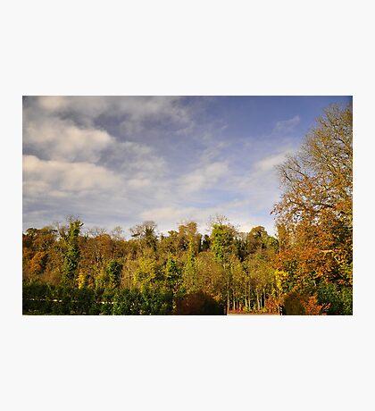 Autumnal colour's. #2 Photographic Print