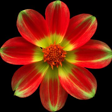 beautiful yellow red flower, blossom, nature by rhnaturestyles