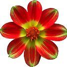 wunderschöne gelb rote Blume, Blüte, Natur von rhnaturestyles