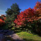 Fall Colors by Stefan Trenker
