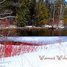Warmest Wishes by Robin Webster