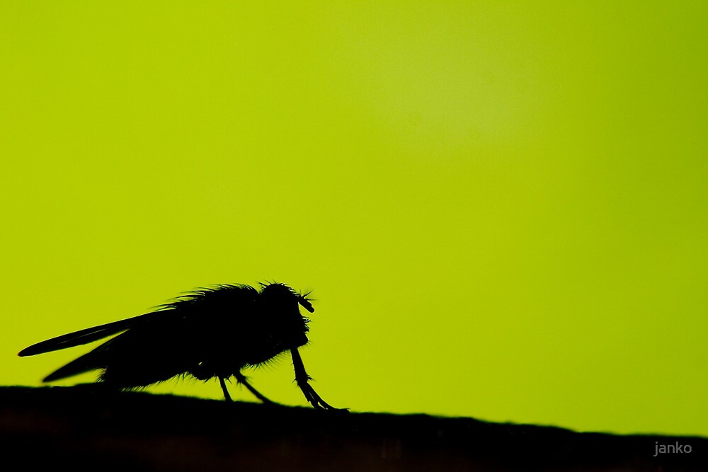 silhouette of a fly by janko
