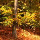 Autumn Glory by Ann Garrett