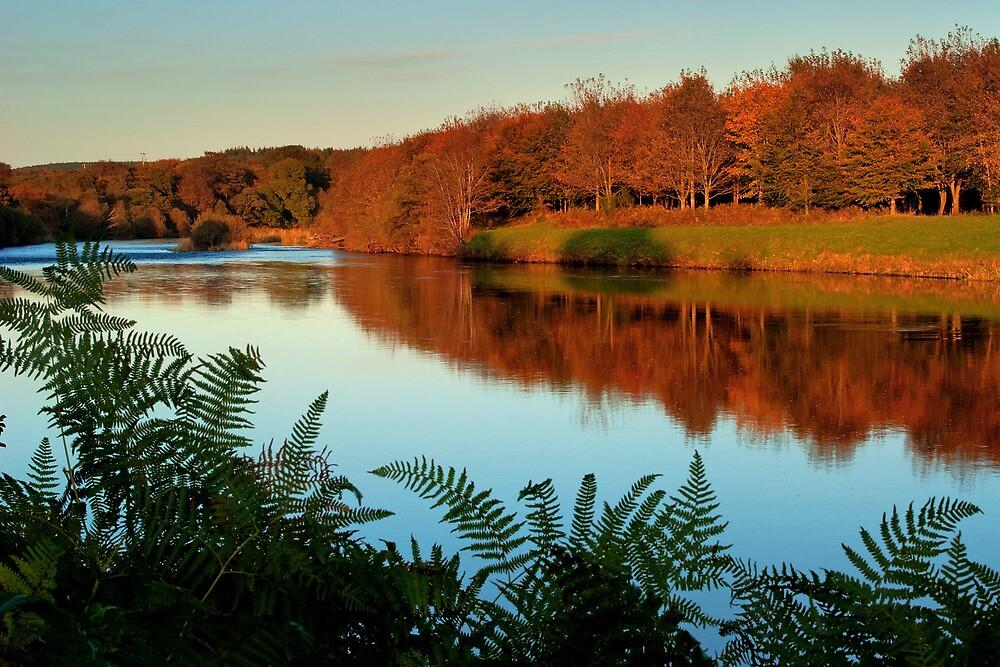 Autumn banks by Panalot