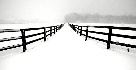 Fenced White Out by Russ Styles