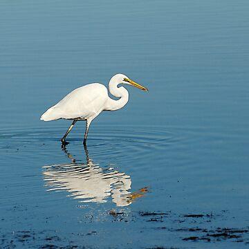 White Heron at Lake Illawarra by baji
