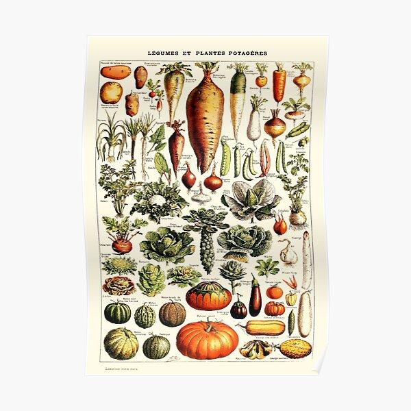 Vintage Botanical Wall Art Vegetables Poster