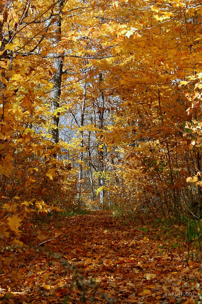 Hawthorn Hollow Woods by kkphoto1