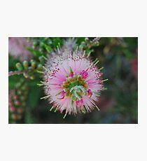 Pretty And Pink Photographic Print