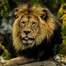 King of the Pride by Laddie Halupa