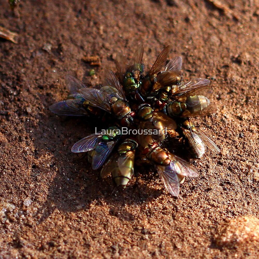 A Bouquet of Flies  by LauraBroussard