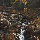 Sierra Fall by Barbara  Brown