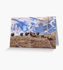 Bison on the Move, Teton N.P., Wyoming. Greeting Card