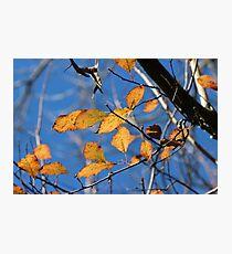 Orange and Blue Photographic Print