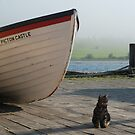 Chibley on the dock by mattmaples