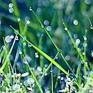 Gorgeous Green Bokeh Morning by TomRaven