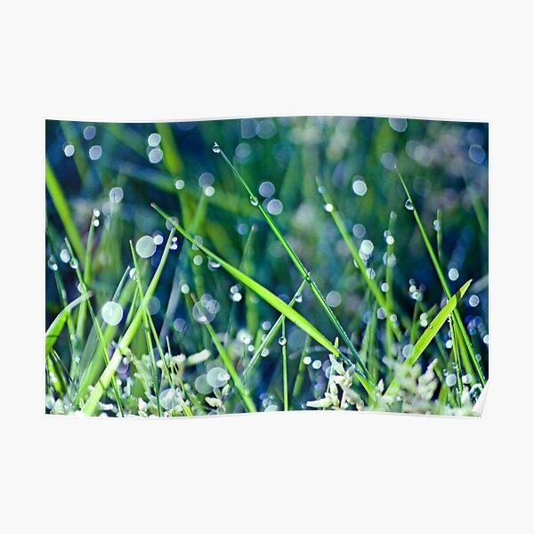 Gorgeous Green Bokeh Morning Poster