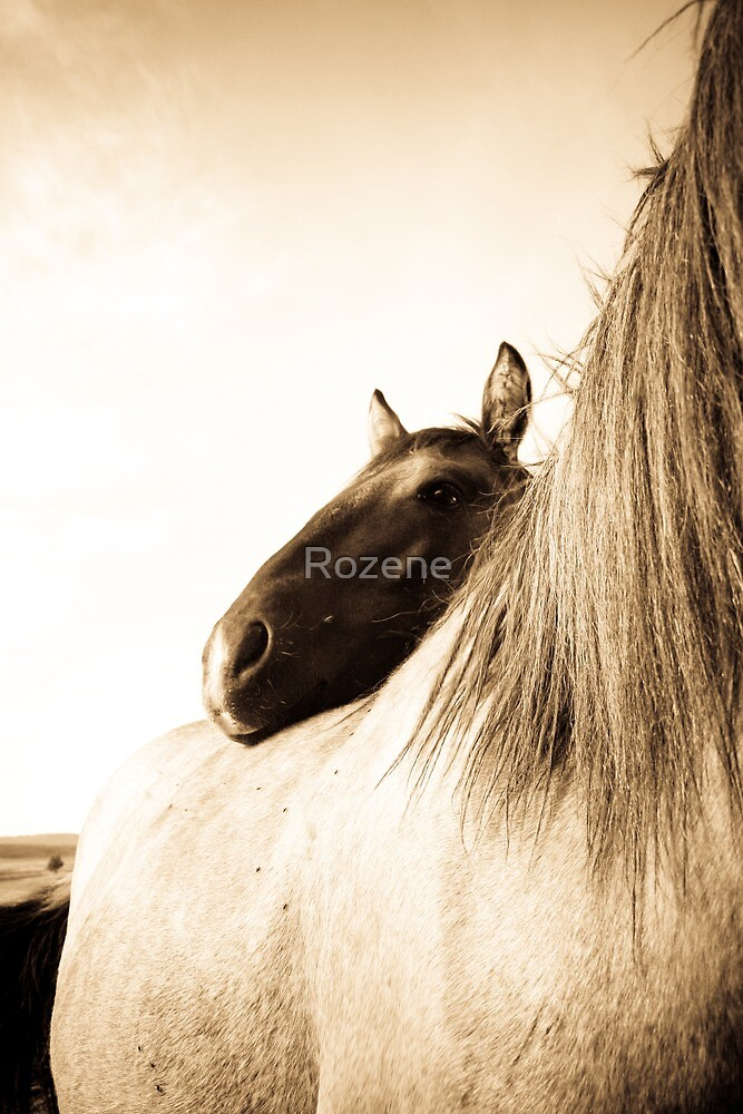 Sorraia Filly and Mare by Rozene