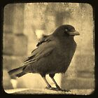 Antique Crow by gothicolors