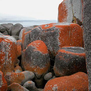 Rocks and Orange Lichen, Binalong Bay, Tasmania, Australia. by kaysharp