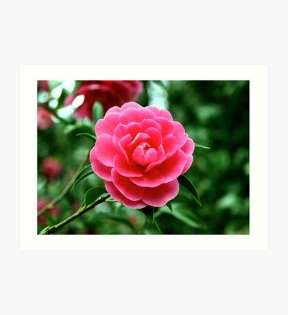 Pink flower As Is Art Print