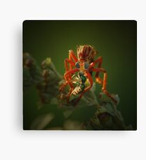 Sci-Fi Robber Fly Canvas Print