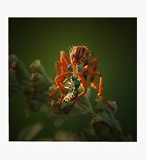 Sci-Fi Robber Fly Photographic Print
