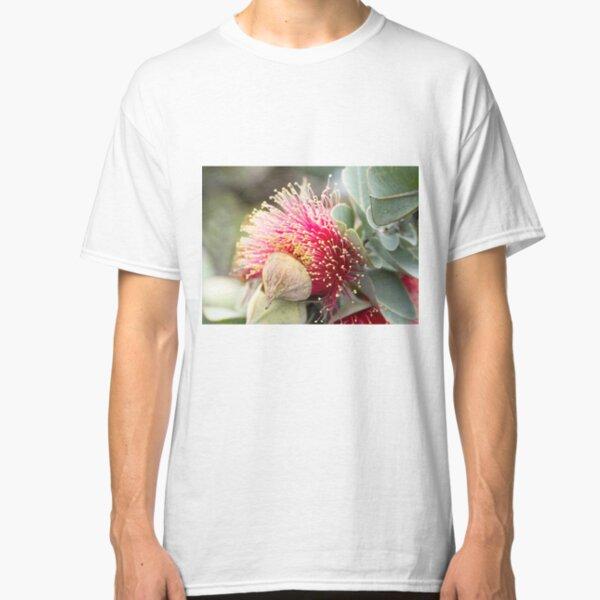 Western Australian wildflower - Mottlecah Classic T-Shirt