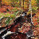 Backcountry Stream by Nancy Barrett