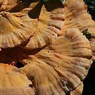 Mushroom by MandieM