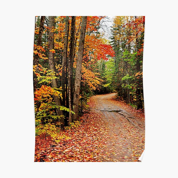 Autumn Study - Oxtongue River Road Poster