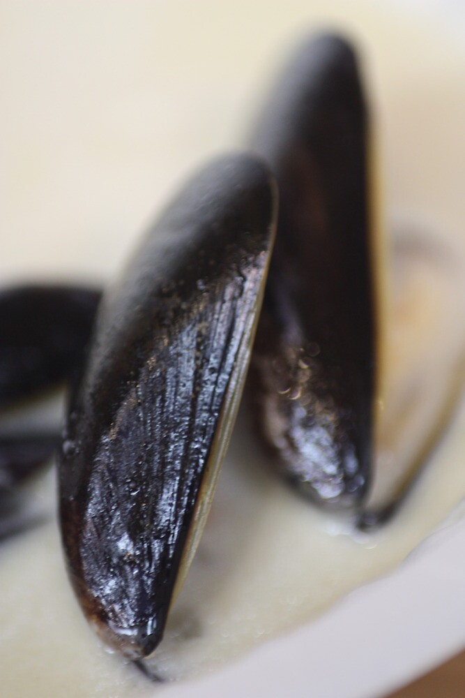 Mussels by Anna Leworthy