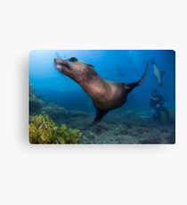 Underwater Gymnastics Canvas Print