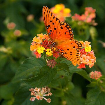 Orange Butterfly by sherryk